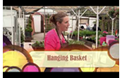 How to create your own hanging basket with Jane McCorkell