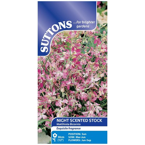 Suttons  Night Scented Stock Mbicorn Flower Seeds